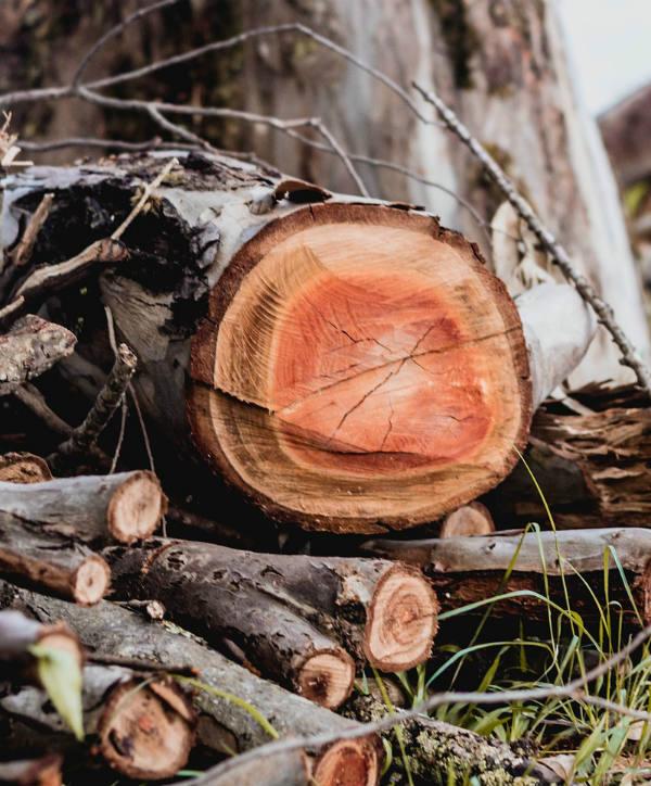 wood-cut-tree-limbs-debris