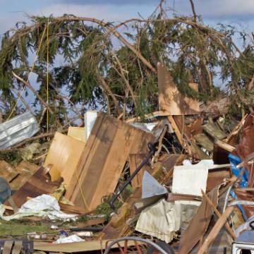 Tree Debris Removal Jacksonville Fl