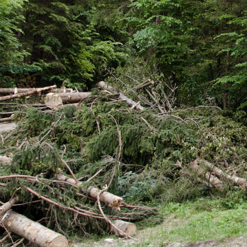 pile of fallen trees